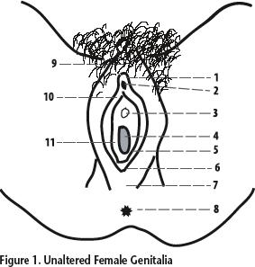 Unaltered Female Genitalia